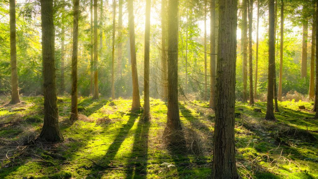 Polònia promou la neutralitat climàtica basada en la captura de carboni pels boscos i sòls
