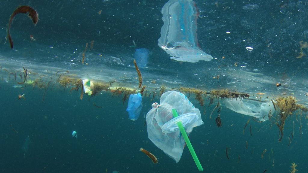 Contaminación plástica en nuestros mares y océanos