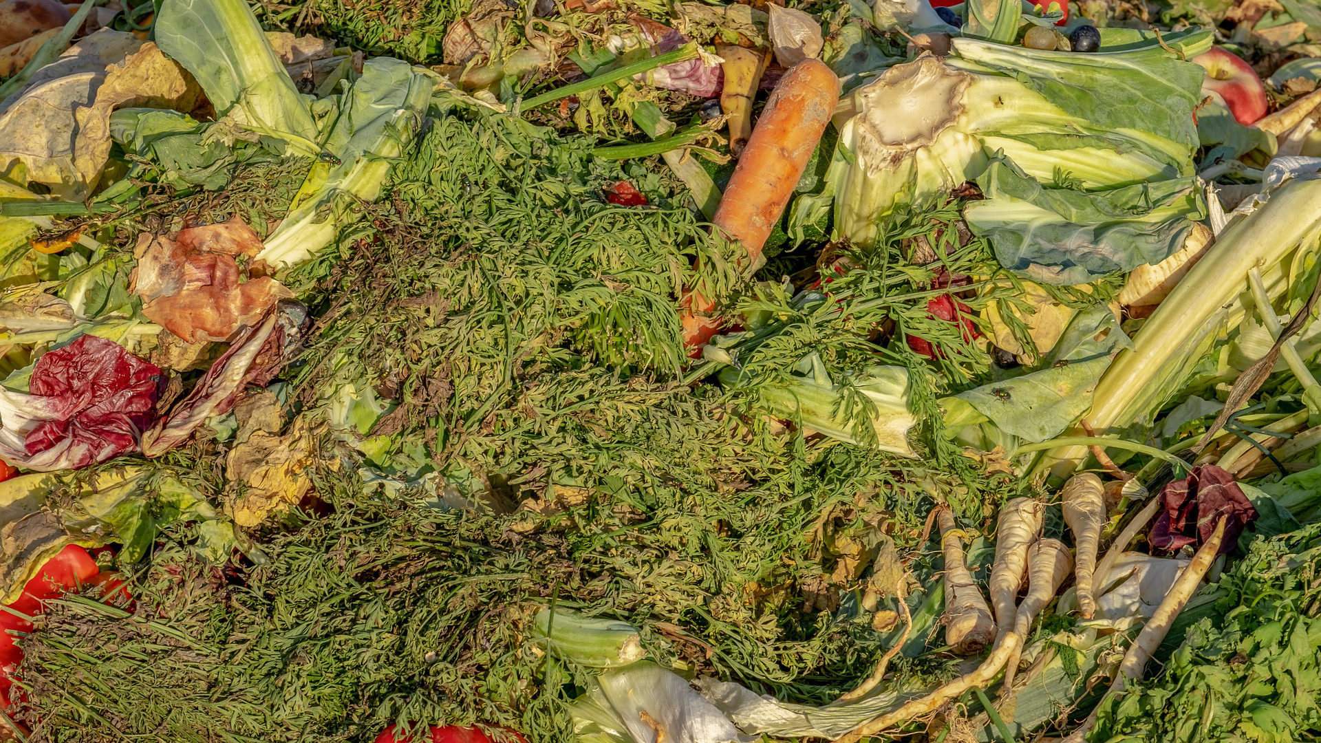 Addressing food loss and waste in Spain