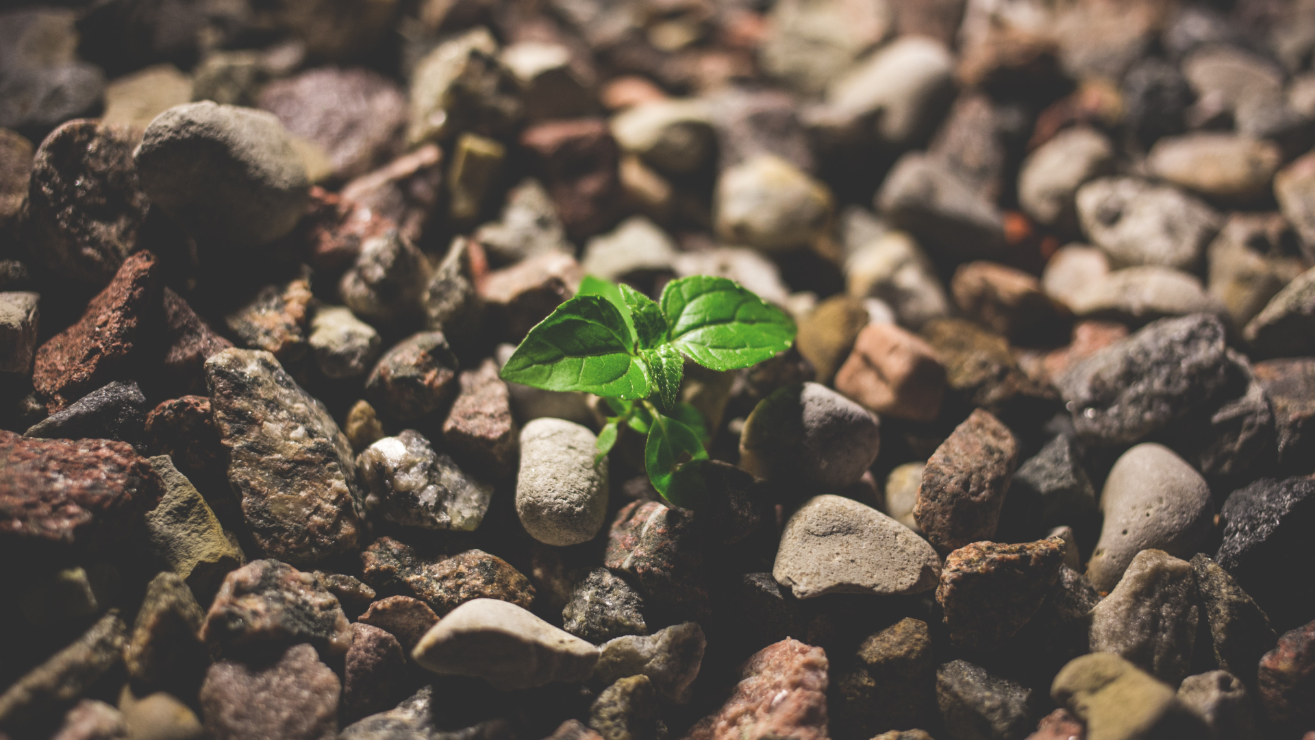 Entendiendo la sostenibilidad ambiental