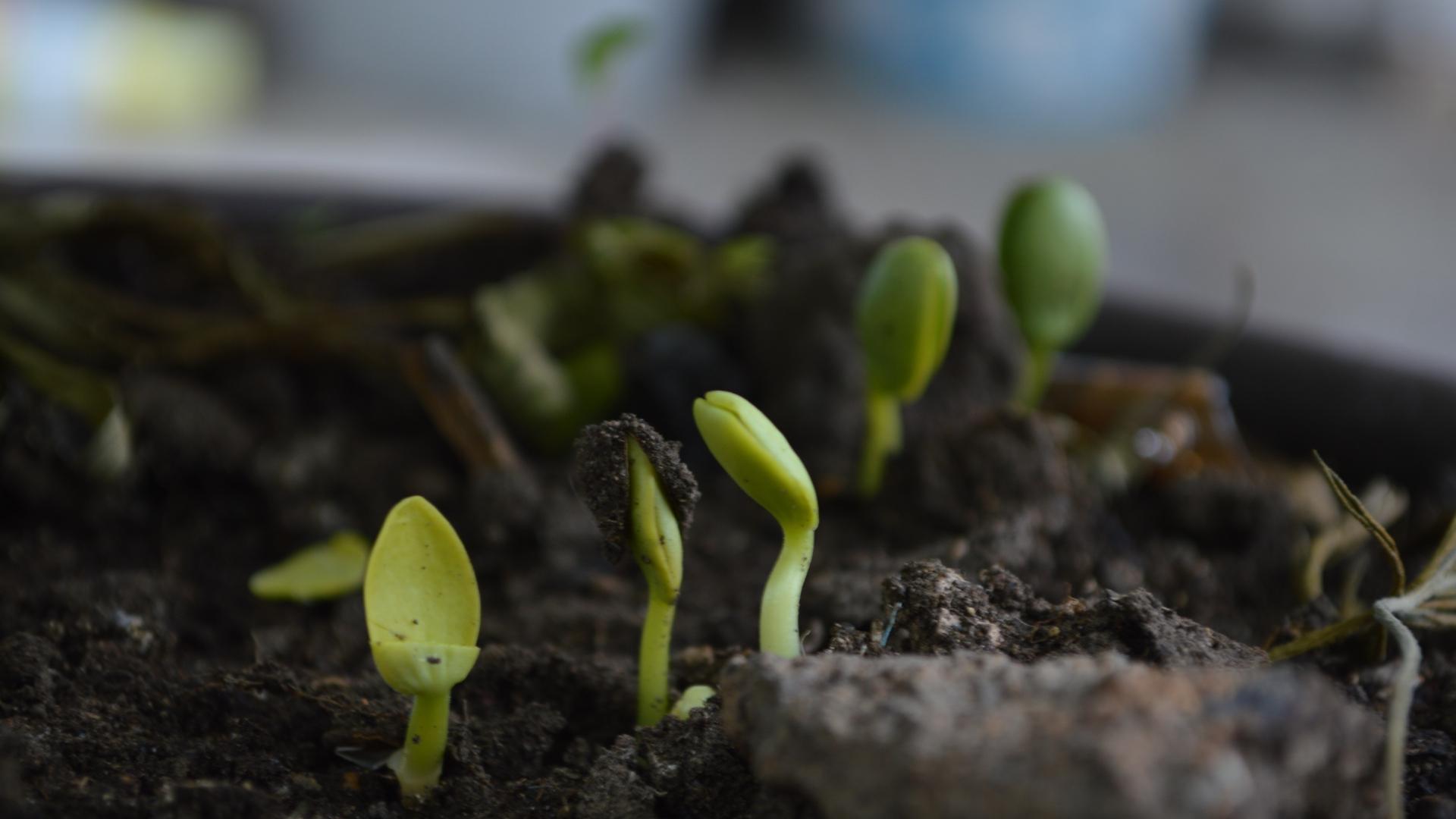 3 idees per a una primavera més sostenible