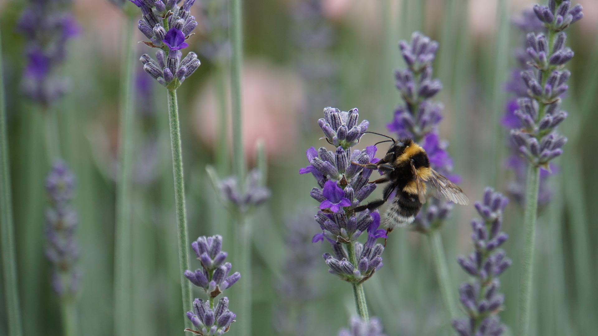 ¿Cómo nos afectan los cambios en la biodiversidad?