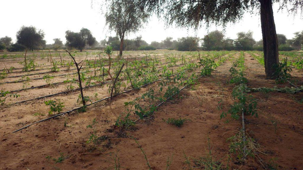 Gran muralla verda africana