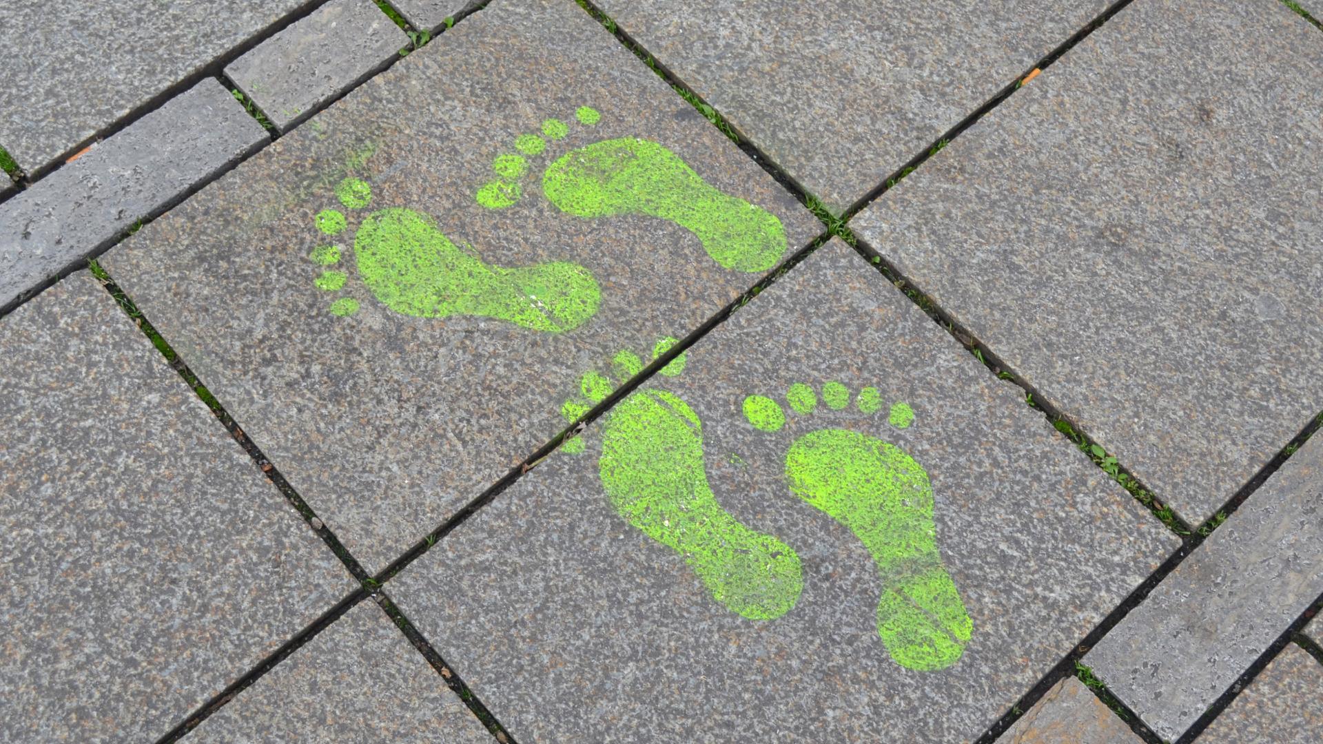 La UPF presenta l'informe sobre la seva petjada de carboni